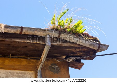 Old gutter full of weeds