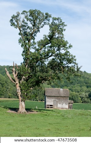 old homestead house under large oak tree - stock photo