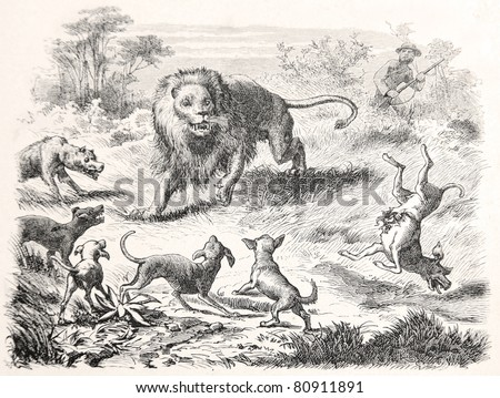 "Old illustration depicting  a lion is surrounded by wild dogs in South Africa, drawn by Karl Liebscher in Emil Holub's ""Seven Years in South Africa"", published in Vienna, 1881"