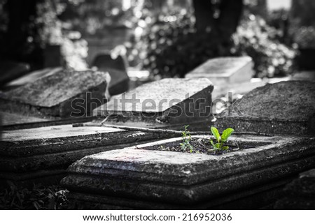 Old jewish cemetery. Selective focus. - stock photo