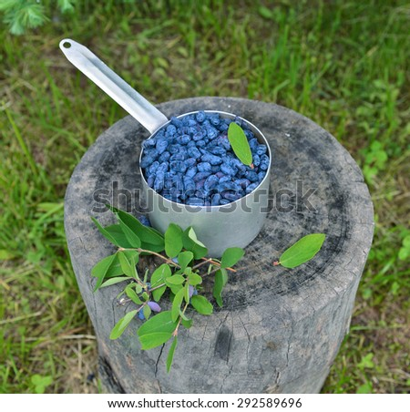 Old ladle with ripe honeysuckle berries and leaves on wooden stub, outdoor vintage still life - stock photo