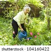 Old lady in garden watering tulip flowers. - stock photo
