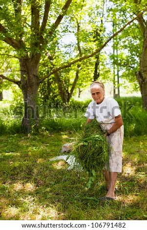 Old lady piling up fresh mowed grass as food for animals