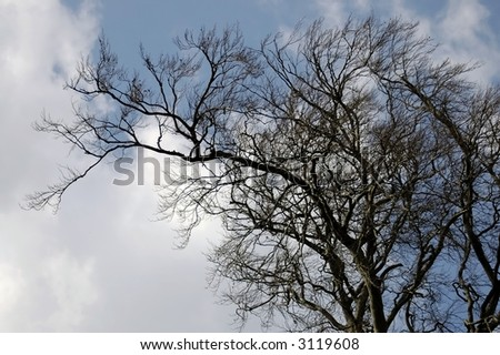 old leafless tree on the sky background
