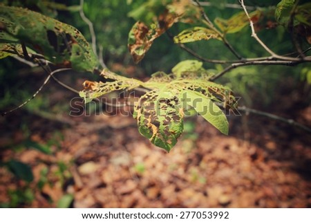 Old leaves with insects - stock photo