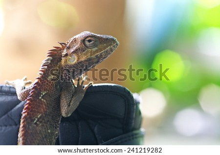 old lizard is holding on the objects with bokeh background - stock photo