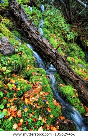 old log in the moss in the waterfall with autumn leaves/The Moss and the Old Tree / moss waterfall - stock photo