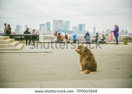 stock-photo-old-lonely-dog-in-a-big-city