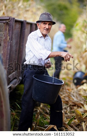 Old man at corn harvest holding a bucket with another worker in the background - stock photo