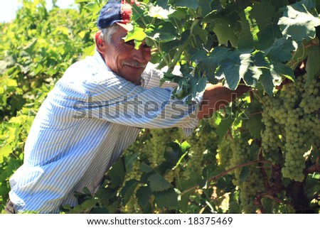 old man working in the vineyard - stock photo