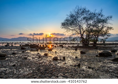 Old mangrove tree with a colorful sunset during low tide at Mor Mu Dong area in Phuket Thailand - stock photo