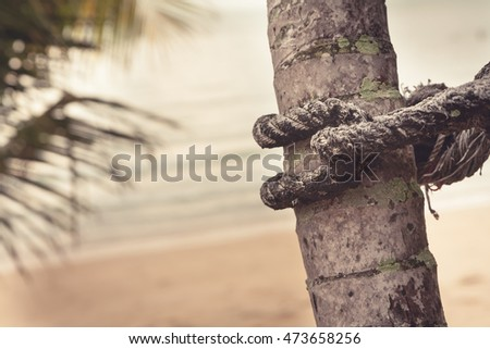 Old marine rope wrapped around palm tree on blurred background of tropical beach during sunset