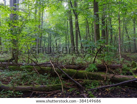 Old moss wrapped spruce tree lying and old natural deciduous stand of Bialowieza Forest in summer morning,Bialowieza forest,Poland,Europe