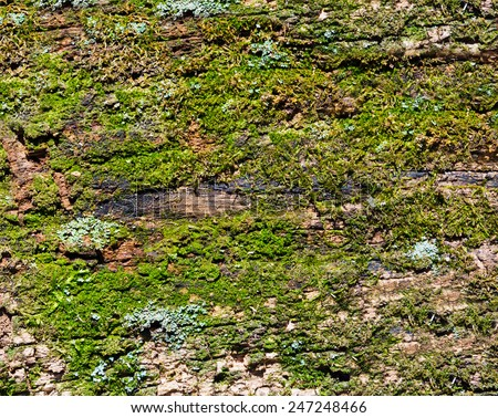 Old mossy rotten wood background texture - stock photo