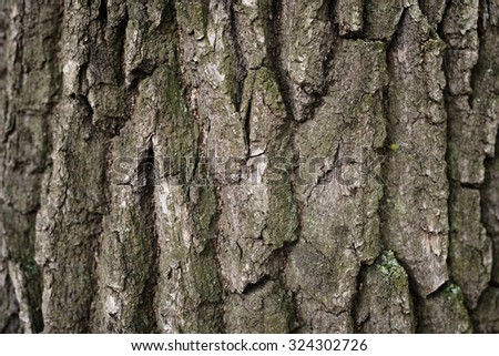 old oak bark background, close up photo - stock photo