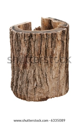Old oak stump - stock photo