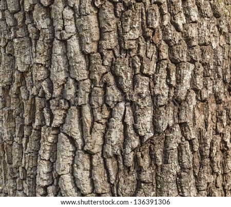 Old oak tree bark for natural textured background - stock photo
