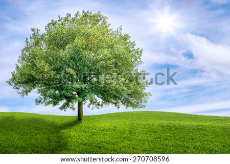 Old oak tree on a green meadow - stock photo