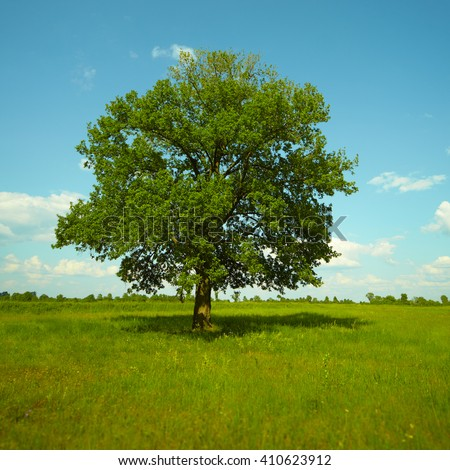 Old Oak tree standing alone in a field against a blue sky with clouds