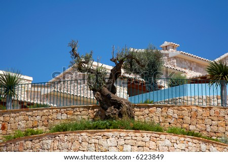 old olive tree in a garden - stock photo