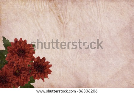 Old paper background with red Chrysanthemum flowers. - stock photo