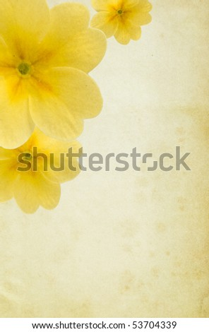 Old paper background with yellow paigle flowers. Detailed texture. Copy-space. - stock photo