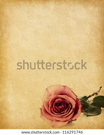 old paper texture with  rose - stock photo