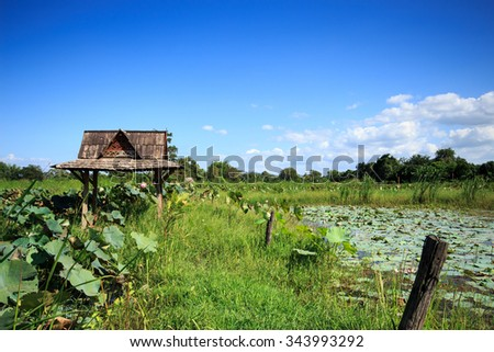 Old pavilion thai in lotus fields