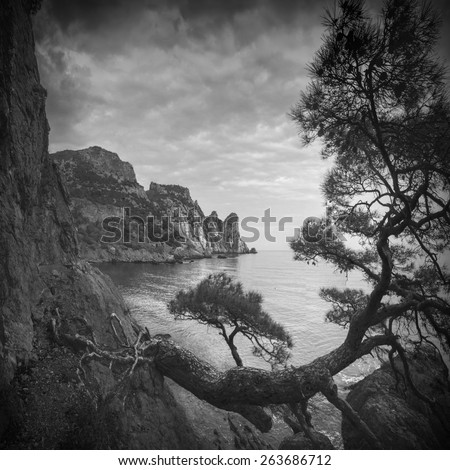 Old pine tree on a cliff in a Crimea sea bay. Black and white