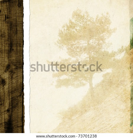 Old pine tree on paper - stock photo