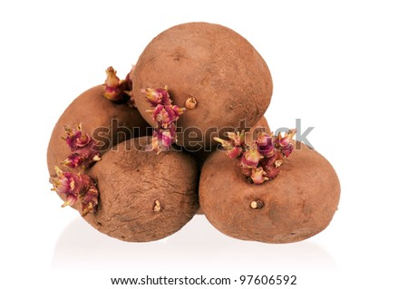 Old potatoes with sprouts isolated on white background - stock photo