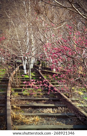 Old railroad track overgrown with trees in spring - stock photo