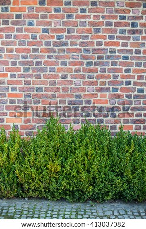 Old red brick wall with green plants - stock photo