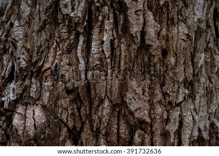 Old rough wood texture. Wooden texture. Wooden background. Tree texture. Tree background. Crack tree texture. Old tree texture. Old tree background. Exotic tree texture. Nature texture background. - stock photo
