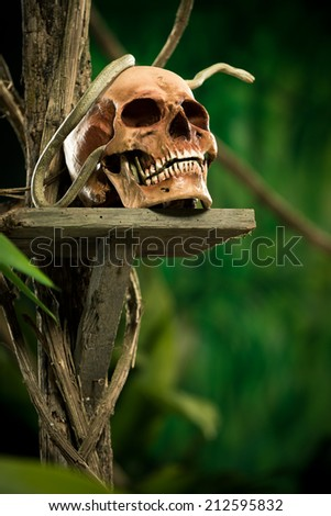 Old ruined skull with snake and wild jungle in the background.