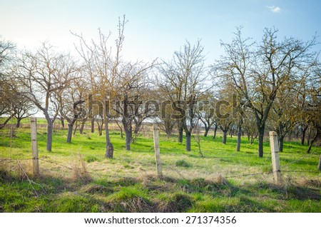 Old rural garden in the countryside with aged leafless trees and a rusty iron barbed wire fence on a sunny spring day with sun rays and soft filters applied to suggest the warmth of the light - stock photo