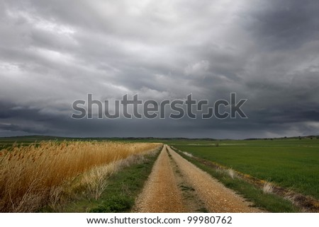 Old rural road and reeds and storm