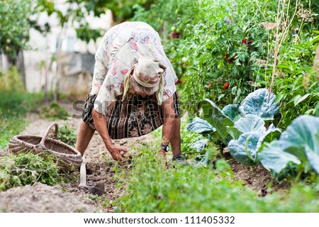 Old rural woman weeding in her garden with a hoe - stock photo