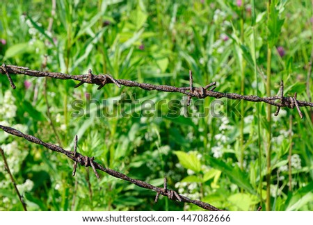 Old rusty barbed wire on grass background. - stock photo