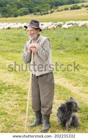 Old shepperd man with his dog near flock - stock photo