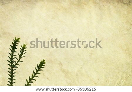 Old stained paper background with twigs. - stock photo