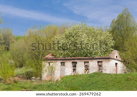 old stone building with a tree growing on it, standing on green meadow against blue sky. - stock photo