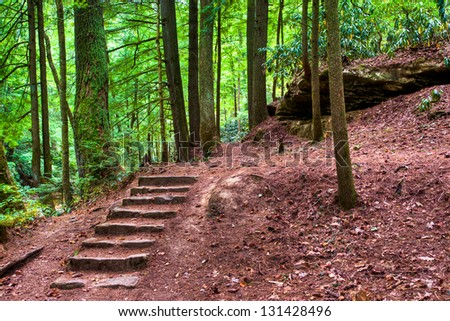 Old stone stair in the mystic woods.