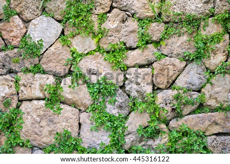 Old stone wall with green ivy texture - stock photo