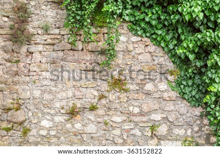 Old stone wall with ivy as background - stock photo