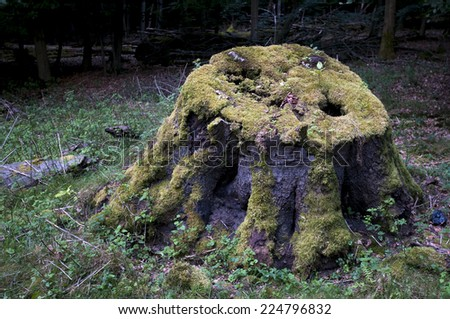 old stump decaying - stock photo
