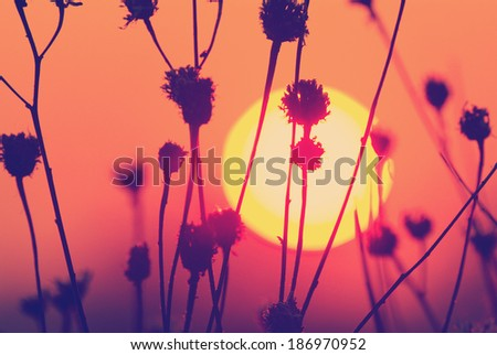 old style instagram nashville tone sunset landscape with sun over silhuette of dry grass - stock photo