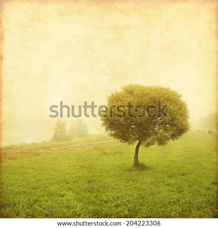 Old style photo of lonely tree in the field.  - stock photo