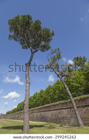 Old town wall from Lucca, Tuscany, Italy, Europe - stock photo
