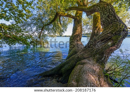 old tree and lake - stock photo